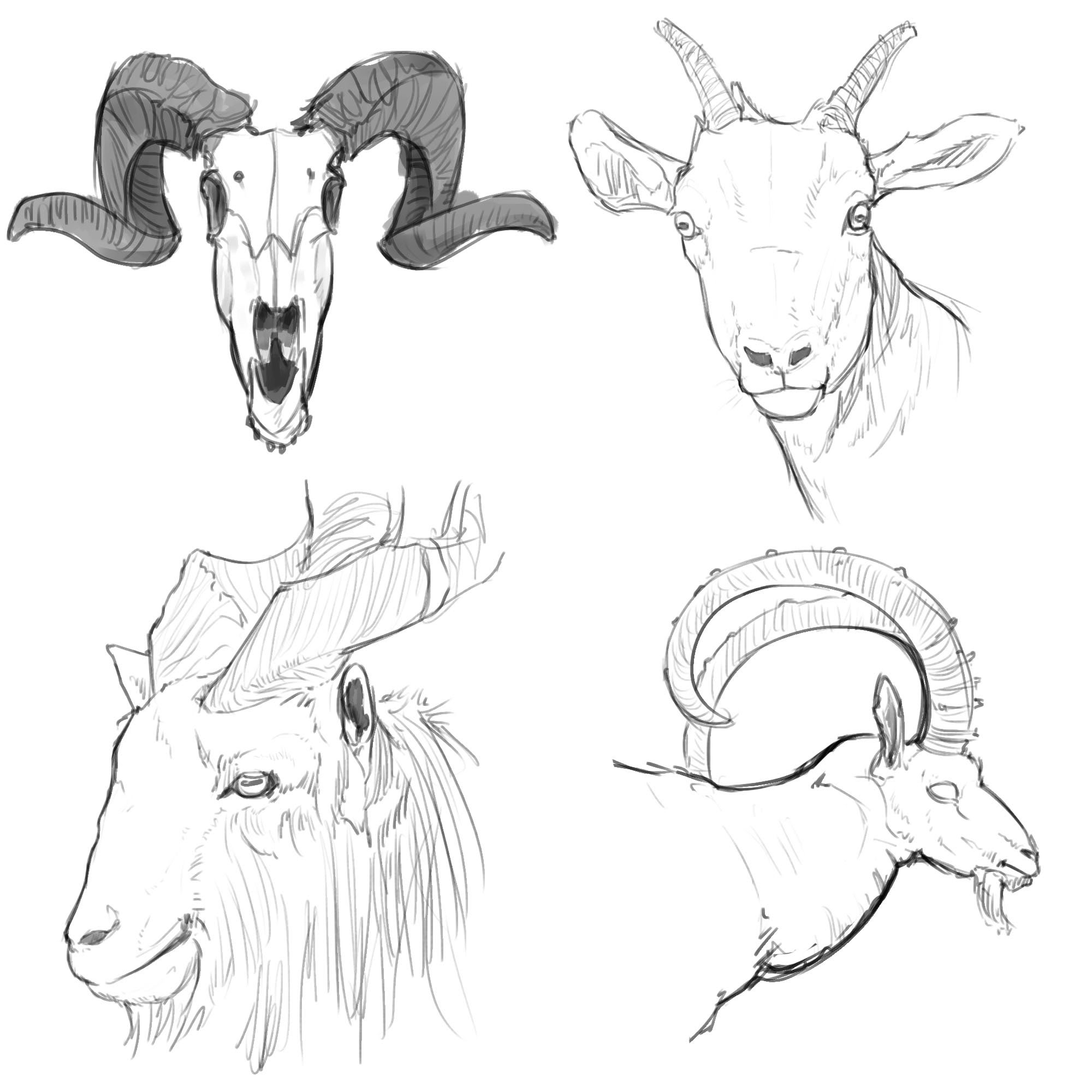 2000x2000 Goat Drawings Goat Life Drawings Goats And Sheep