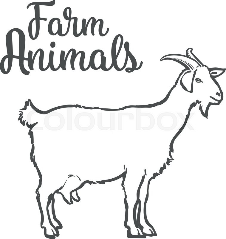 758x800 Farm Pet Goat Sketch Drawn By Hand, Cattle, Milk And Goat Meat