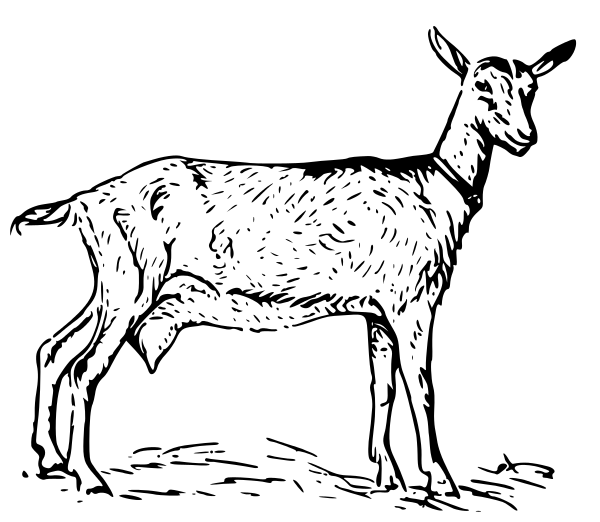 600x522 Drawing Clipart Goat