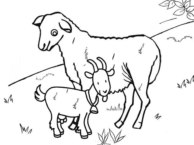 650x488 Farm Animal Template