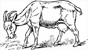 350x200 Free Goat Bw Sketch Clipart