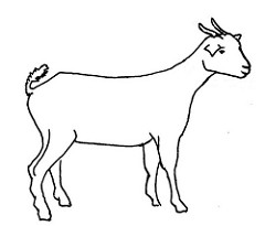 240x205 Line Drawing Of A Goat Used In Information Flyer