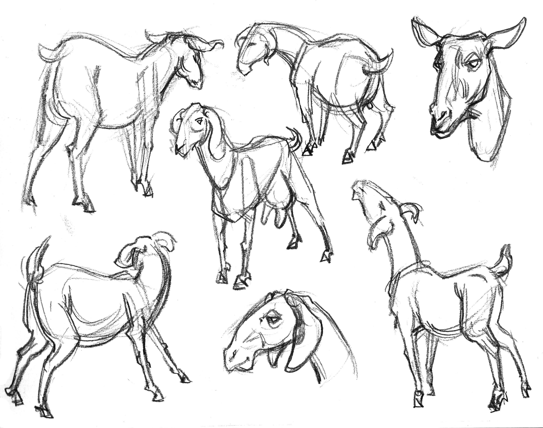 3121x2460 Garygeraths Animal Drawing