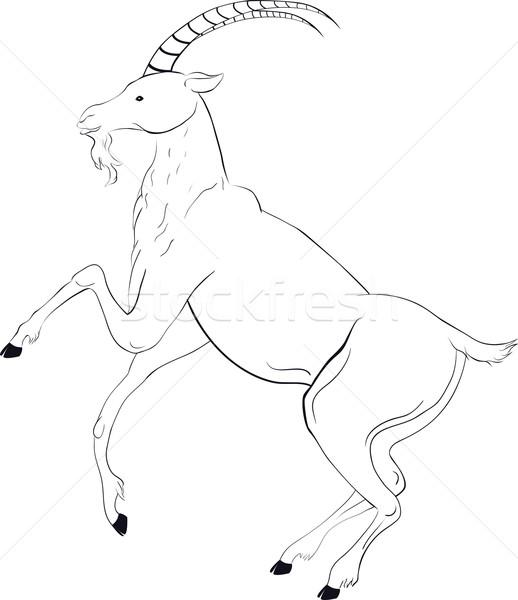518x600 Goat Sketch Vector Illustration Irina Shishkina (Hipatia