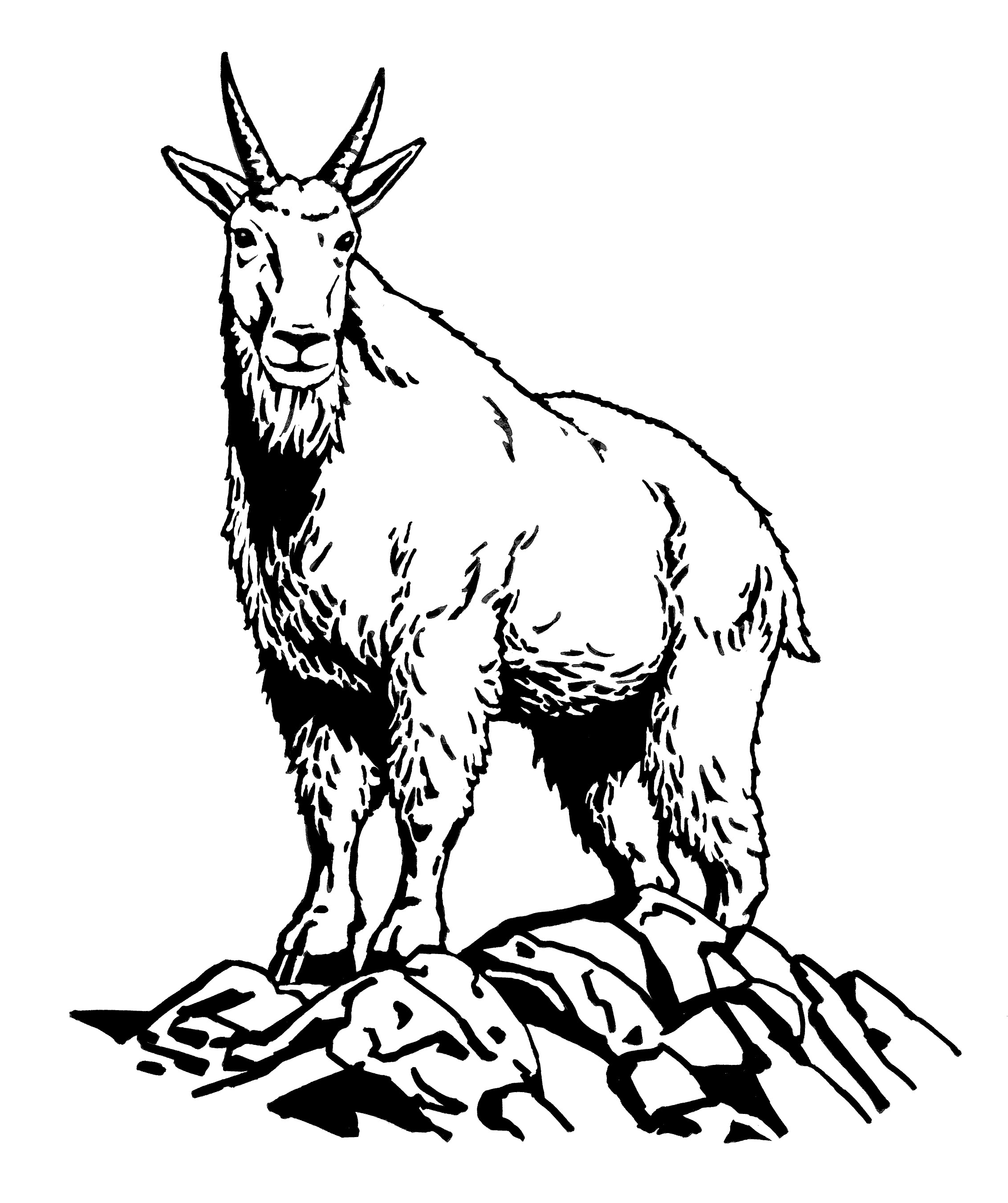 Attractive 2264x2701 Chamois Animal Coloring Pages Beautiful Goat Clipart Line Drawing