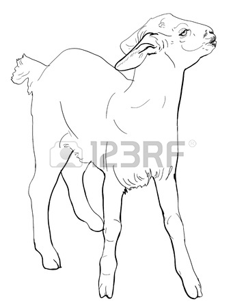 360x450 Drawing Goat Head Sticking Tongue Out Royalty Free Cliparts
