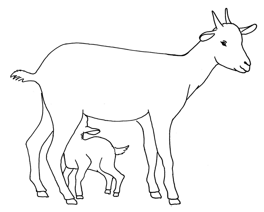 1024x826 Drawing Of A Goat Line Drawing Of A Goat With Kid Used