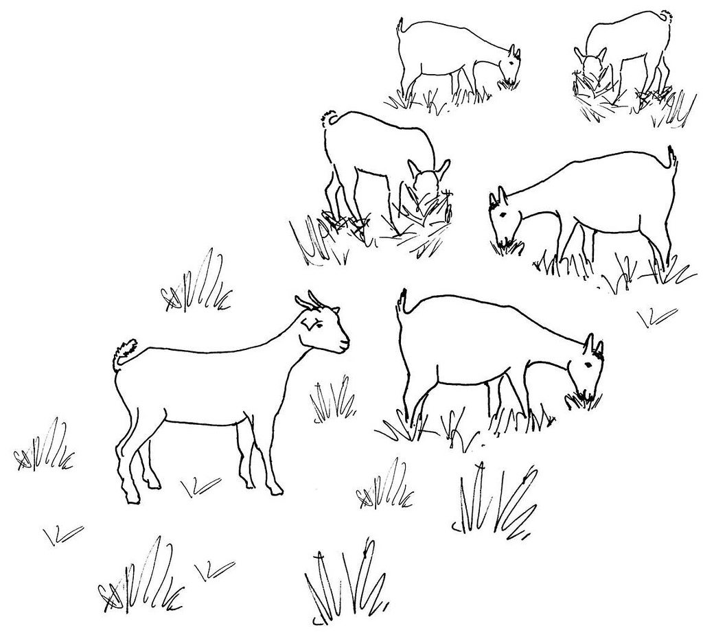 1024x934 Line Drawing Of A Grazing Goat Herd Used As Extension