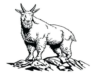 400x322 Goat Coloring Sheet Young Pages Face