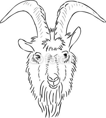 360x400 Goat Face Drawing 32199 Mediabin