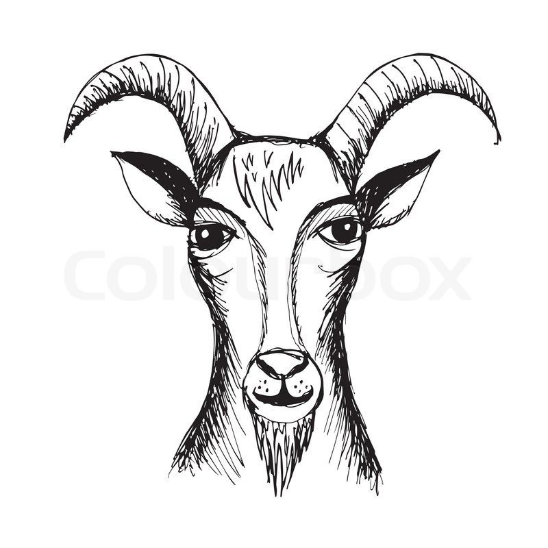 800x800 Goat Face Drawing Goat Face Drawing Realistic