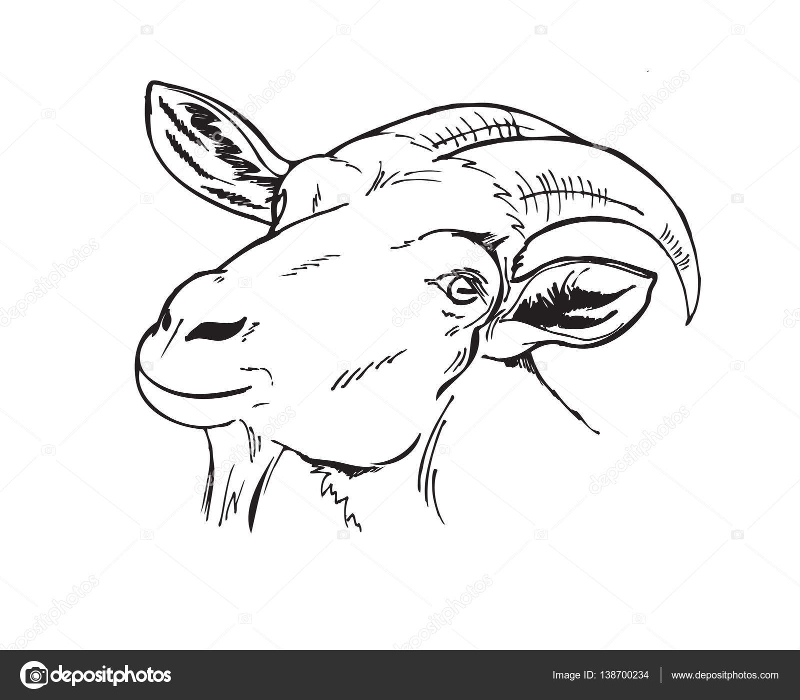 1600x1399 Black And White Head Of The Goat Stock Vector Minyanna