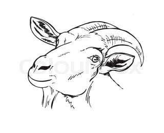 320x259 Goat In The Garden, Hand Draw Stock Vector Colourbox