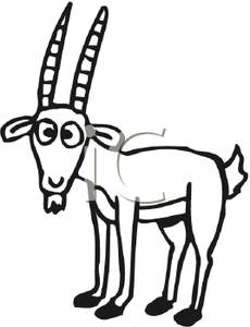 230x300 Billy Goat With A Surprised Look On It's Face