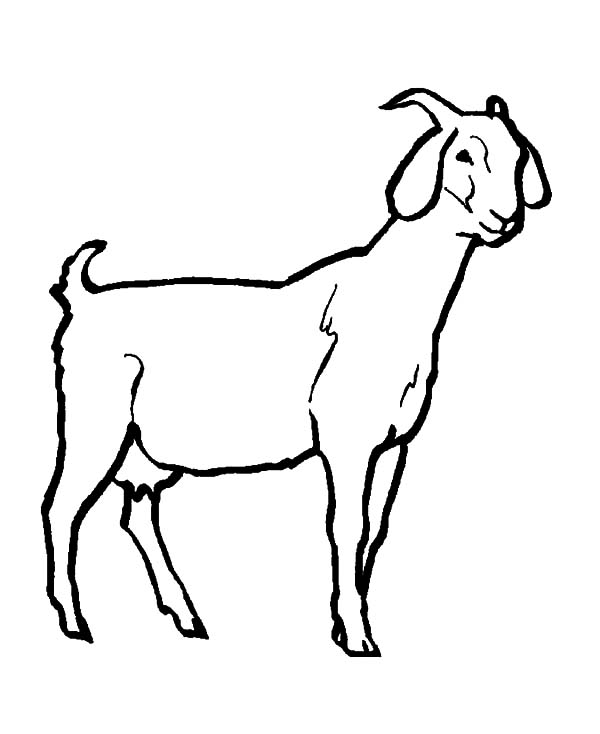 600x734 Goat Coloring Pages