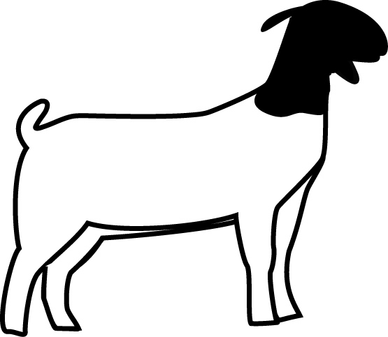 555x483 Boer Goat Head Clipart