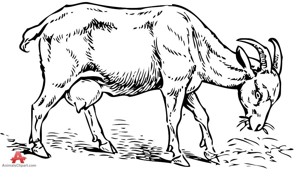 999x575 Drawn Goat Stencil
