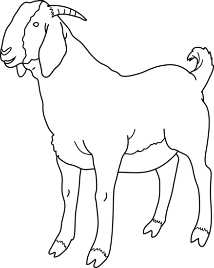 439x550 Goat Coloring Page