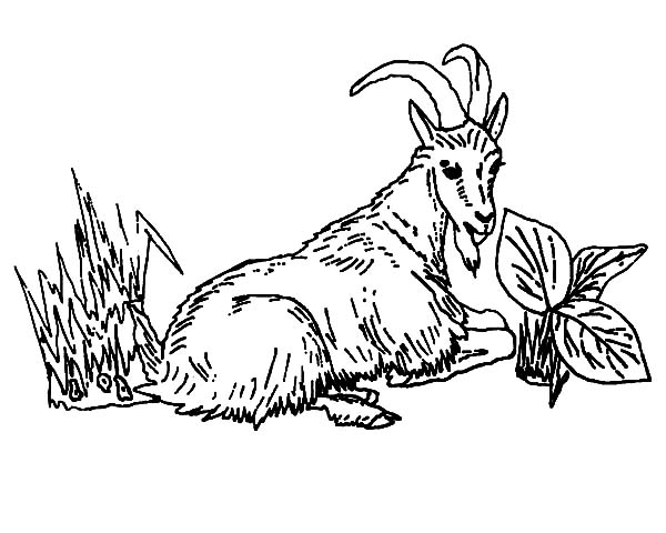 600x480 Mountain Goat Line Drawing