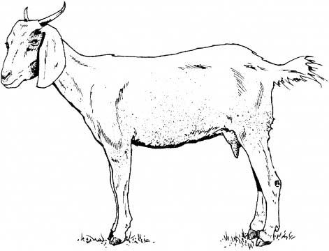 471x360 Sdsu Children's Literature Tanzania Goats (And Books) For Kids
