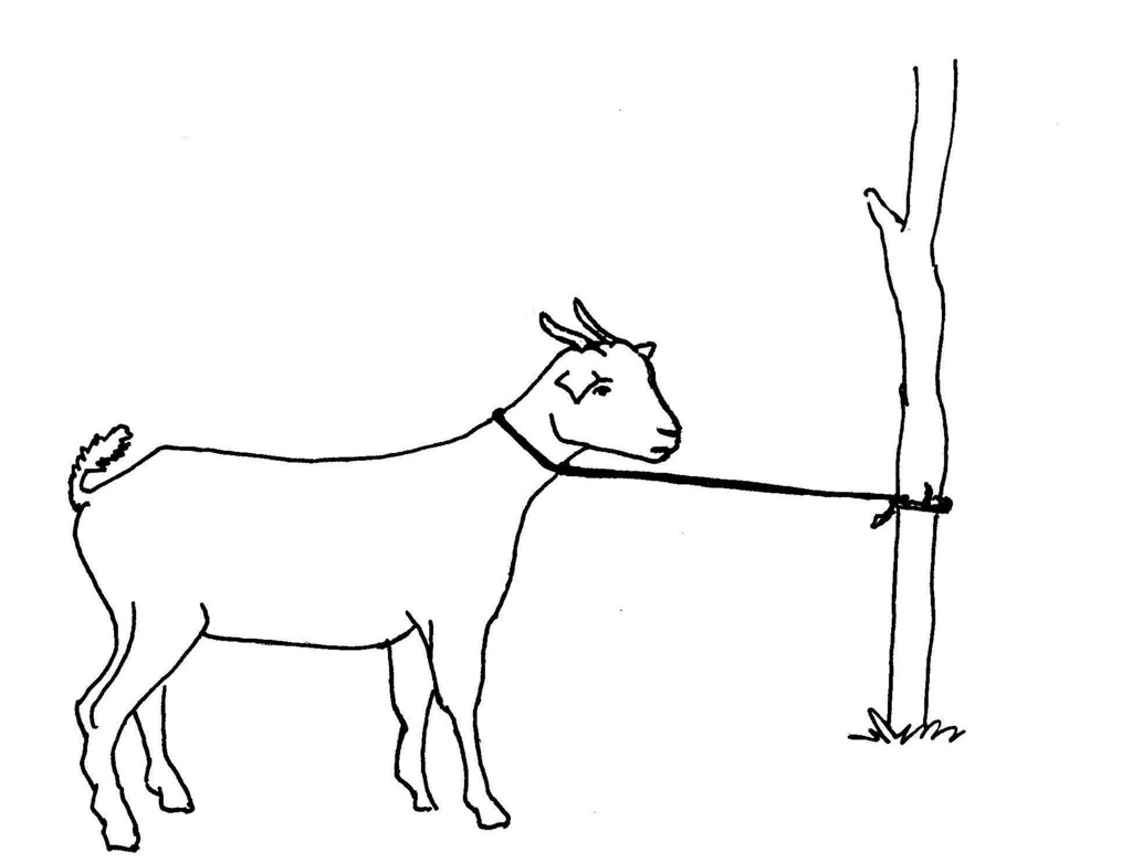 1024x781 All Sizes Line Drawing Of A Tethered Goat