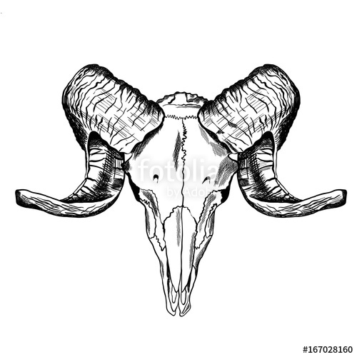 500x500 Illustration With Goat Skull. Hand Drawn. Stock Image And Royalty