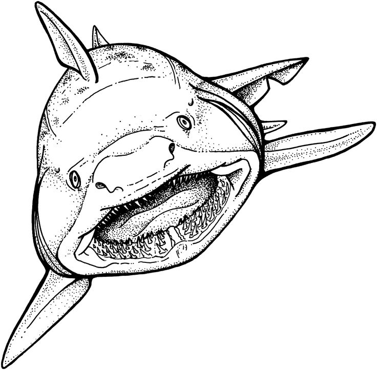 Goblin Shark Drawing at GetDrawings.com | Free for personal use ...
