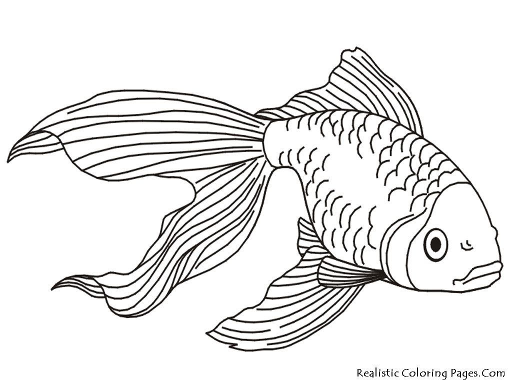 1024x768 Tropical Fish Coloring Pages Gold Fish Kids Coloring Pages