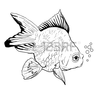 450x386 Goldfish Drawing On White Royalty Free Cliparts, Vectors,