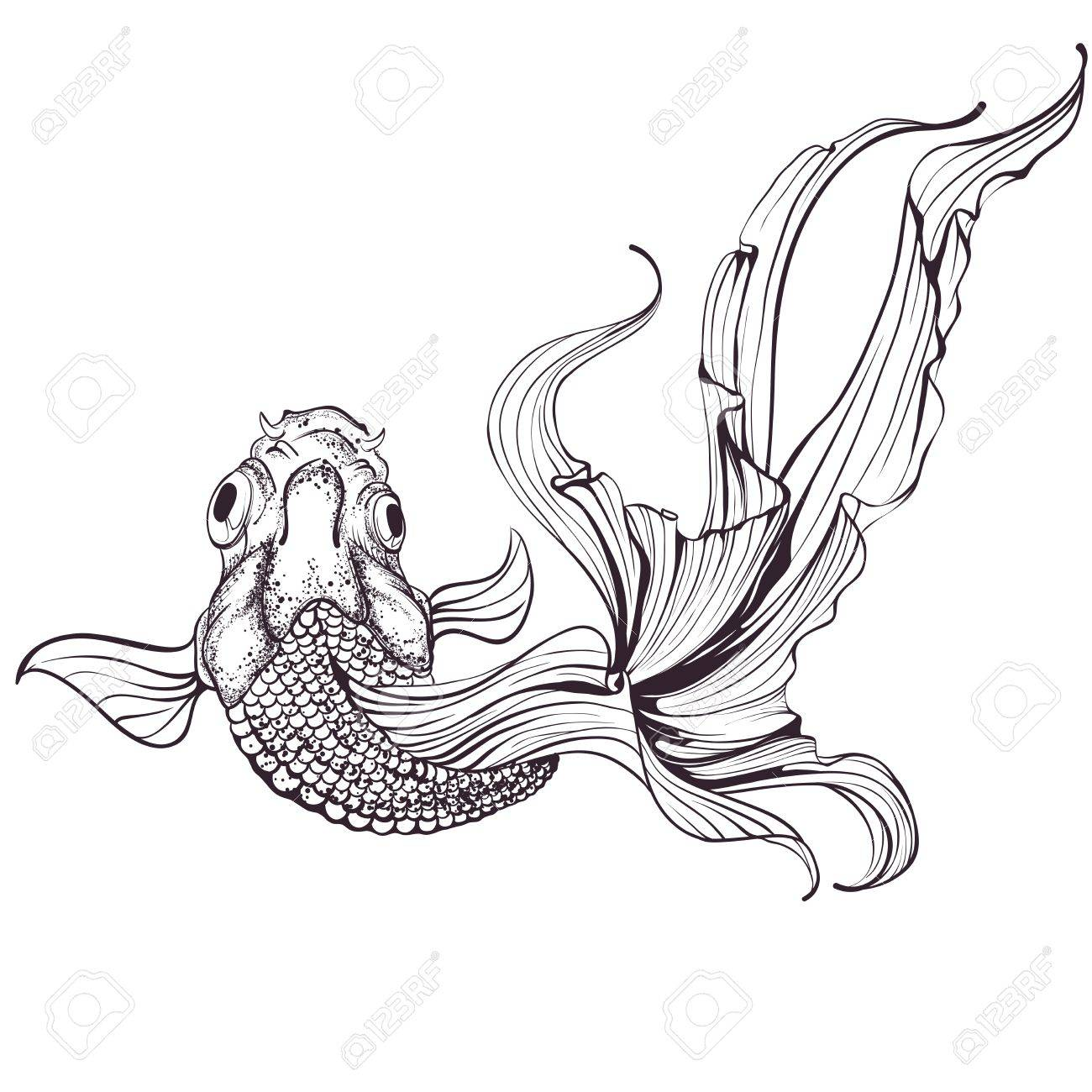 1300x1300 Goldfish Sketch On White Background Royalty Free Cliparts, Vectors