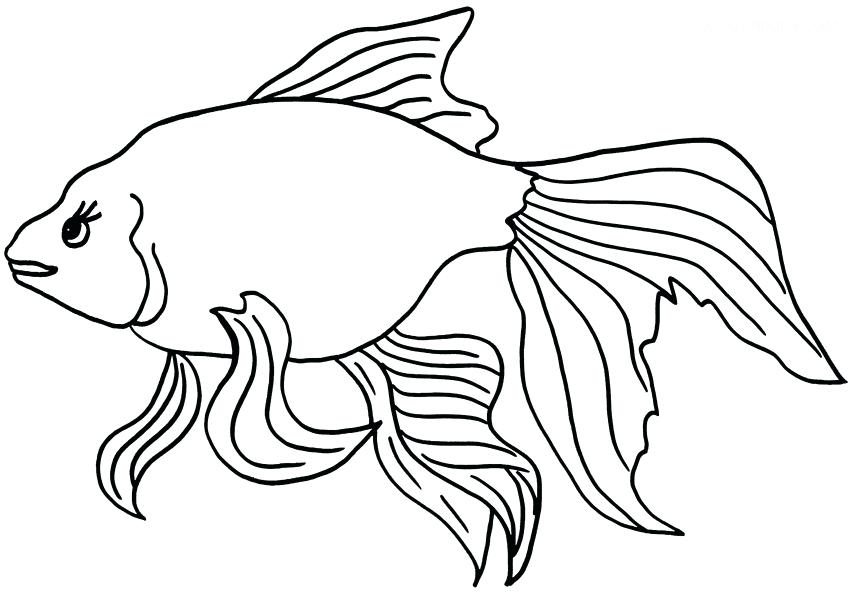 850x593 Classy Goldfish Coloring Page Online Draw With Additional Download