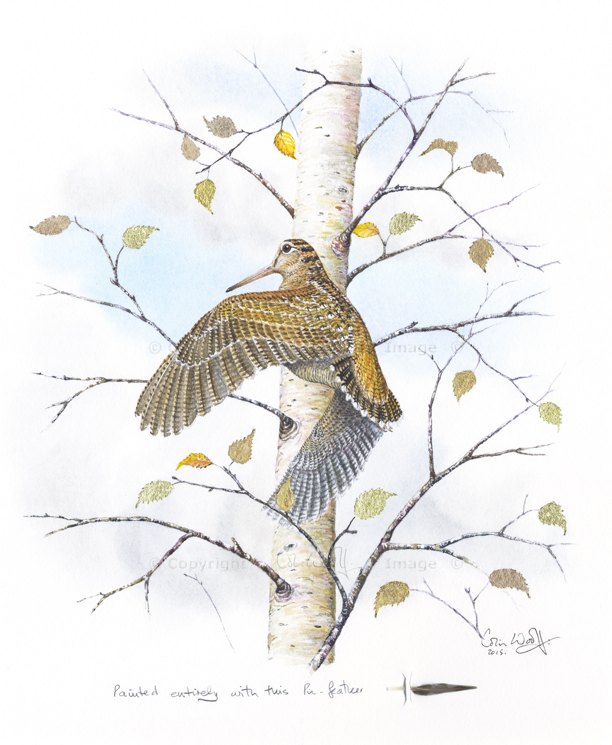 1242x1510 Woodcock Pin Feather Paintings With Gold Leaf The Hazel Tree