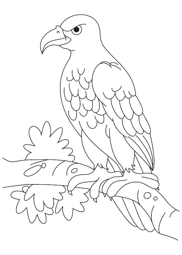 613x860 Eagle Color Page Bald Eagle Coloring Page Plus Hungry Bald Eagle