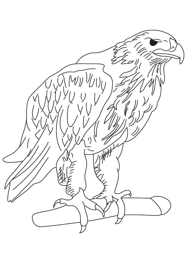 613x860 Eagle Picture To Color Eagle Color Page Golden Eagle Coloring Page