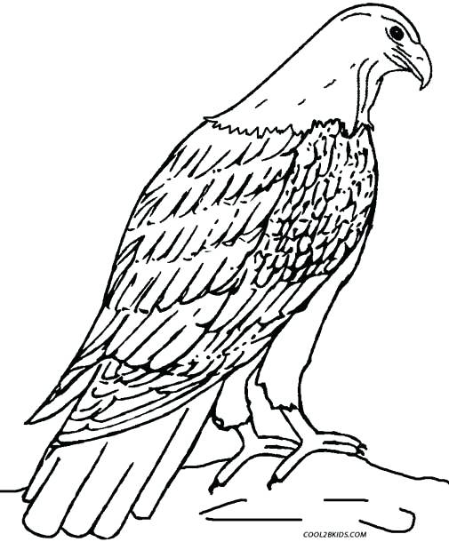 505x610 Golden Eagle Coloring Pages Printable For Kids Birds Bes On Cute
