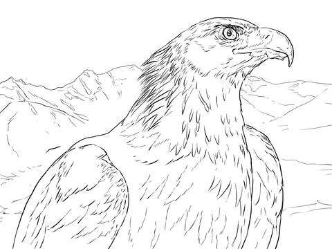 480x360 Golden Eagle Portrait Coloring Page Free Printable Coloring Pages