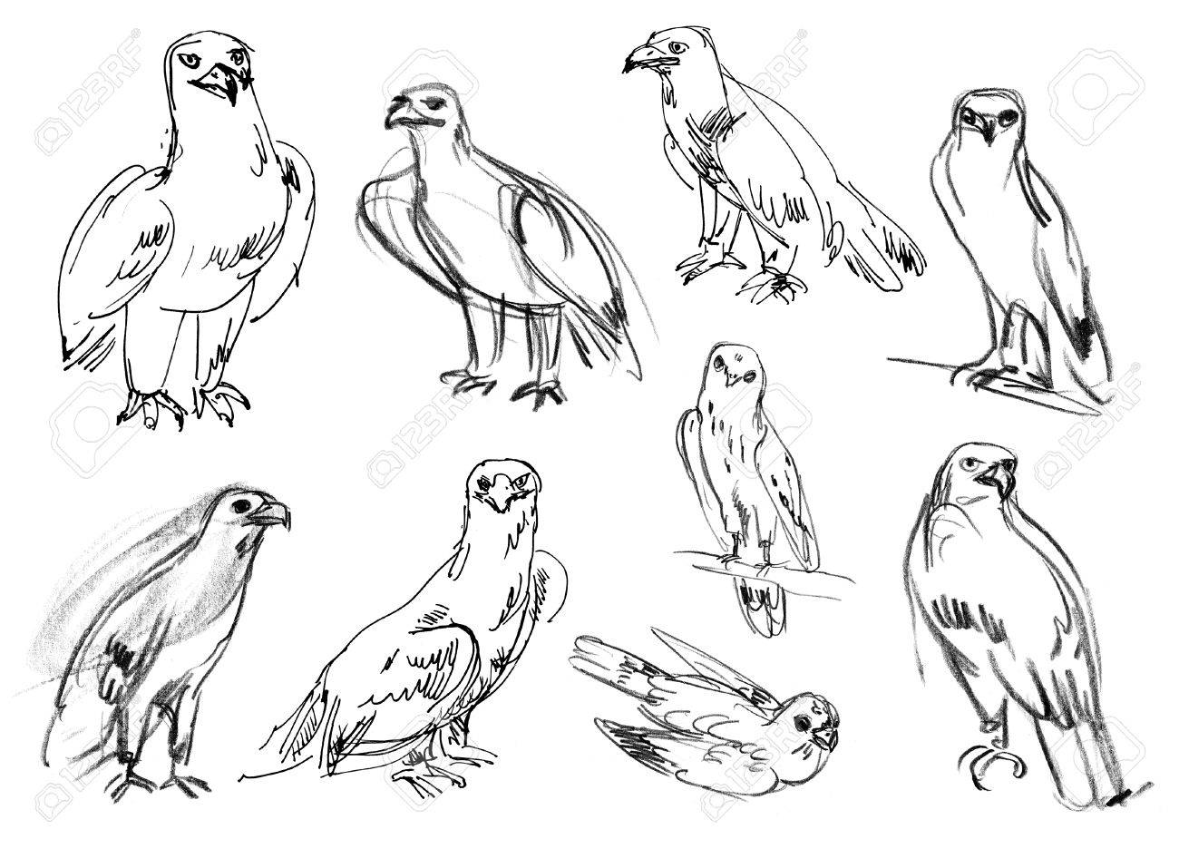 1300x957 Golden Eagle. Buzzard. Legged Buzzard. Kestrel. Hawk. Set. Hand