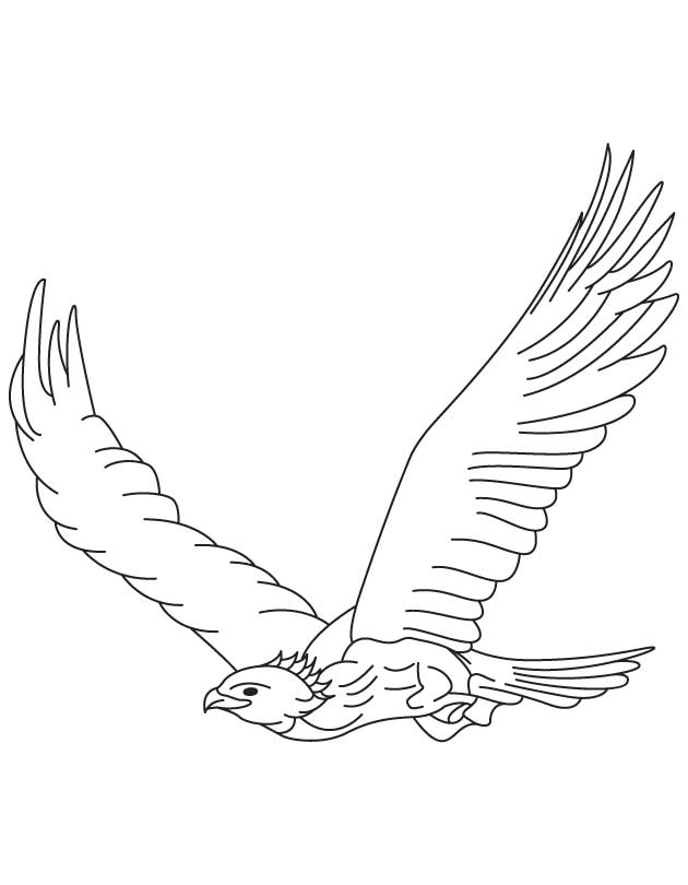 630x810 Golden Eagle In Flight Coloring Page Download Free Golden Eagle