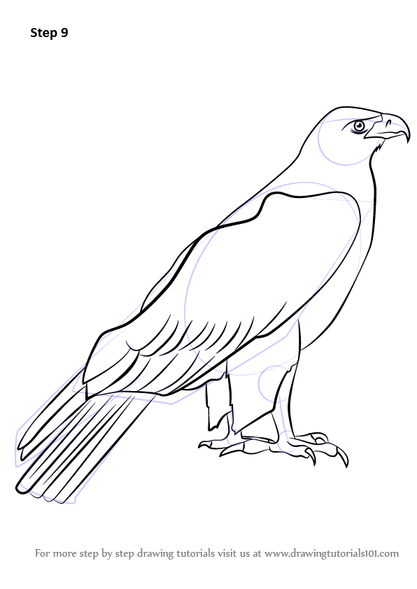596x842 Learn How To Draw A Golden Eagle (Birds) Step By Step Drawing