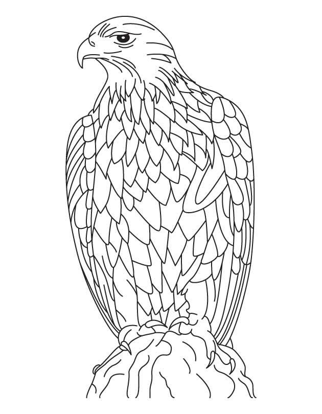 630x810 Silent Golden Eagle Coloring Page Download Free Silent Golden