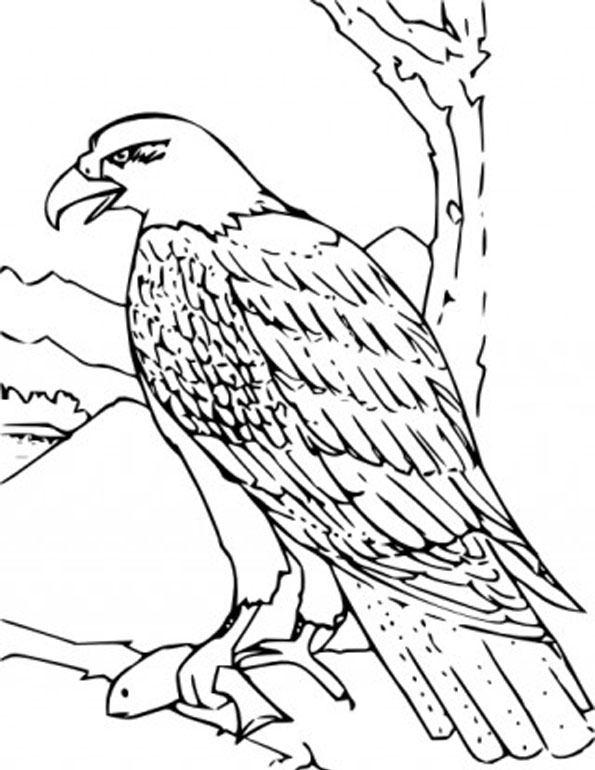 595x770 Golden Eagle Clip Art Archives