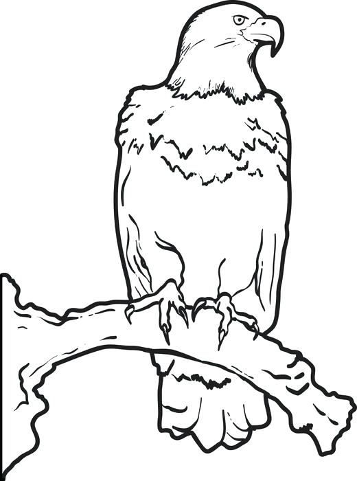 520x700 Coloring Page Of An Eagle Bald Eagle Coloring Page Coloring Page