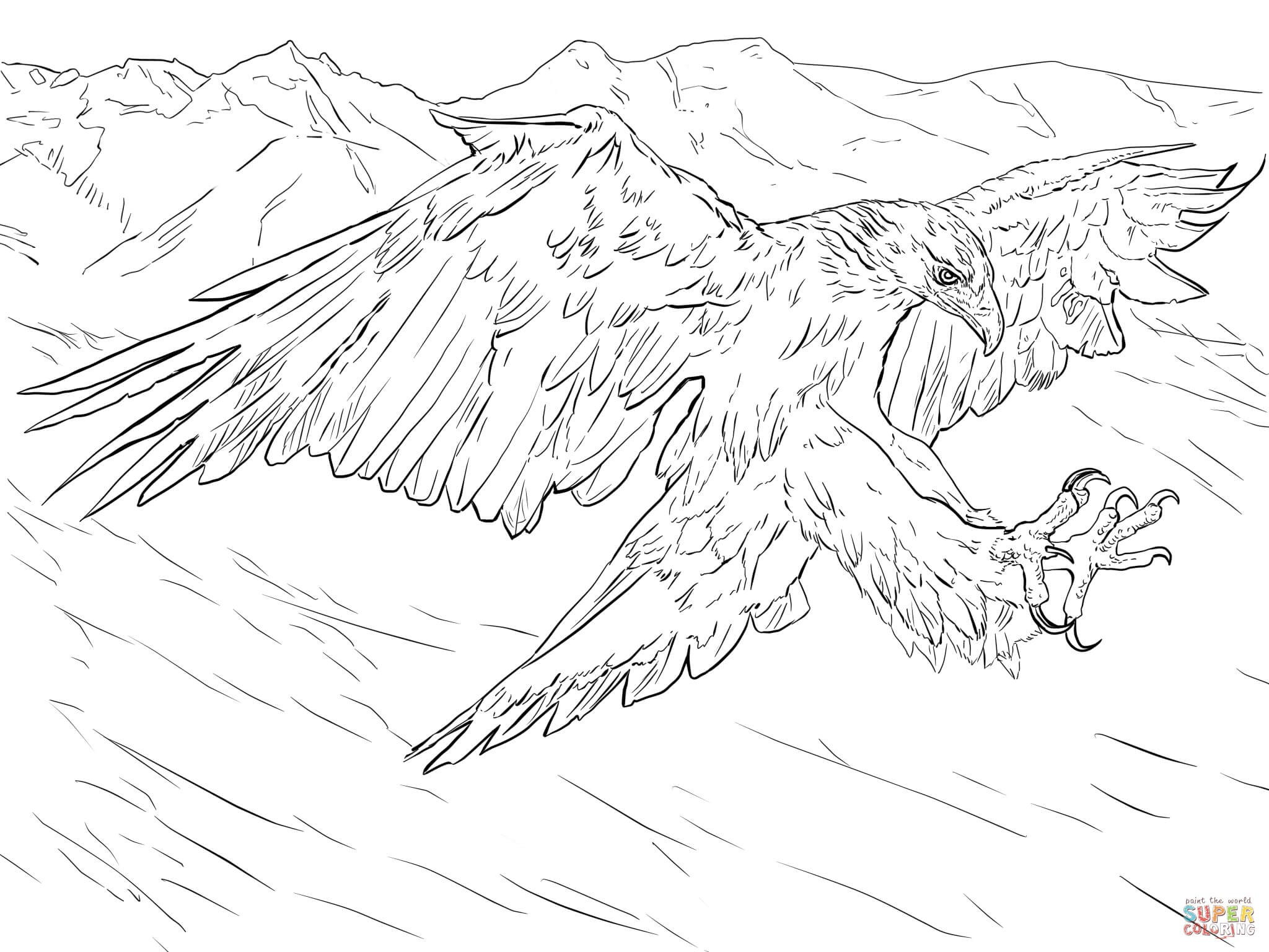 2048x1536 Coloring Pages Draw A Golden Retriever Awesome Golden Eagle