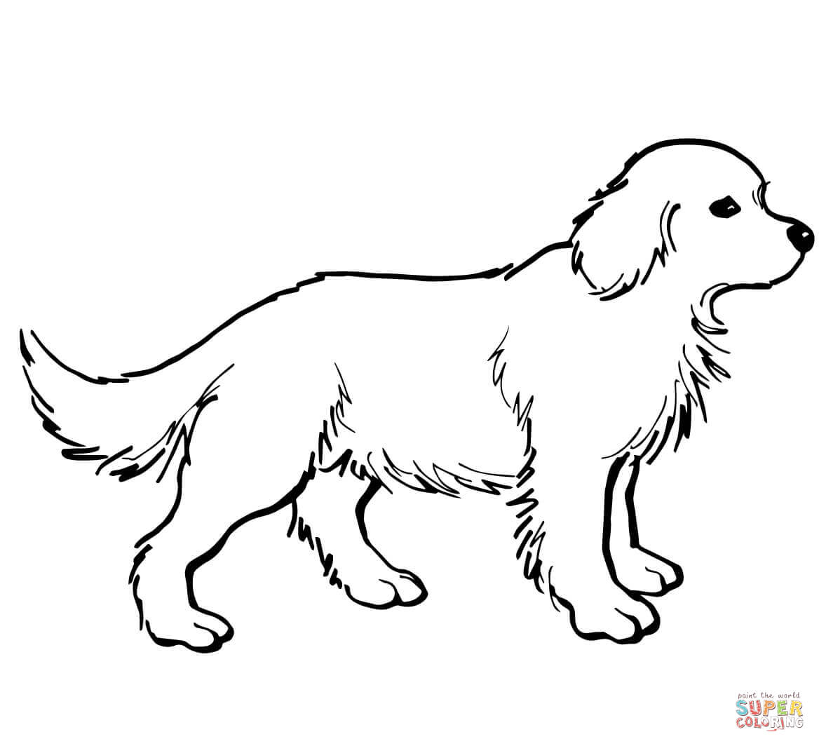 1168x1064 Golden Retriever Puppy Coloring Pages