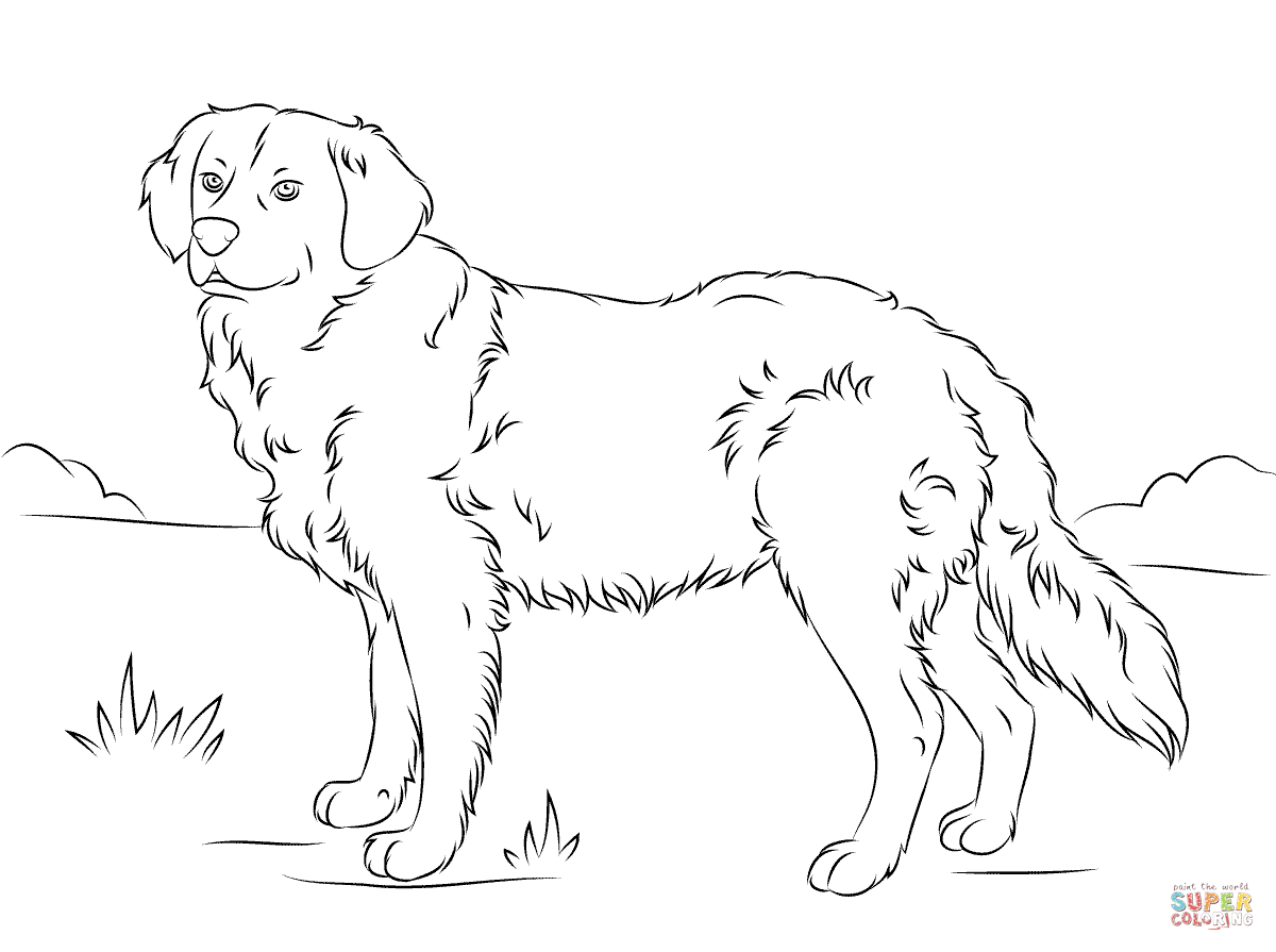 1200x895 Golden Retriever Coloring Page Free Printable Coloring Pages