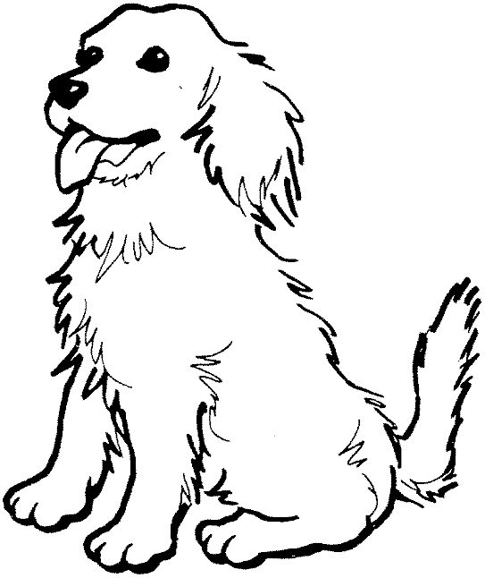 543x646 Coloring Pages Draw A Golden Retriever