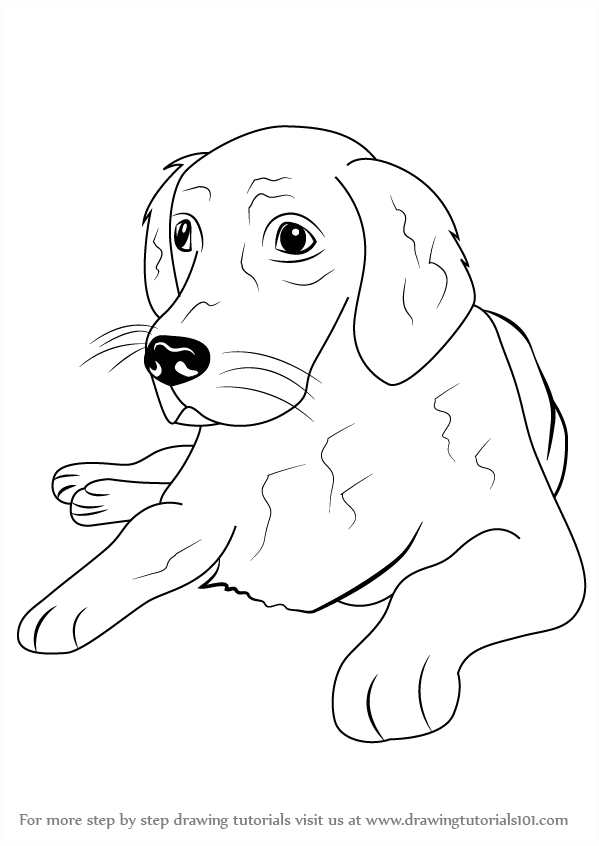 599x846 Learn How To Draw A Golden Retriever (Farm Animals) Step By Step