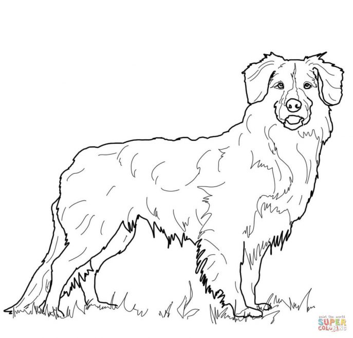 687x658 Retriever Tags Coloring Pages Draw A Golden Retriever Drawings