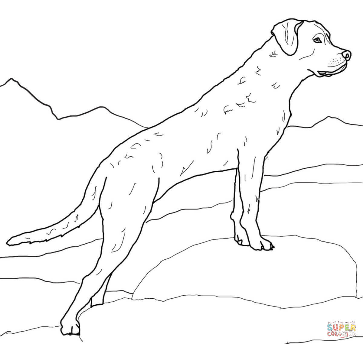 1200x1138 Coloring Pages Draw A Golden Retriever Chesapeake Bay Retriever