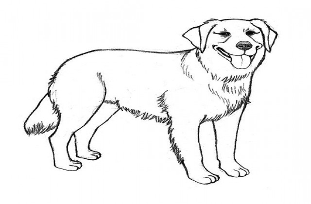 640x420 Coloring Pages Draw A Golden Retriever Pug Line Drawing
